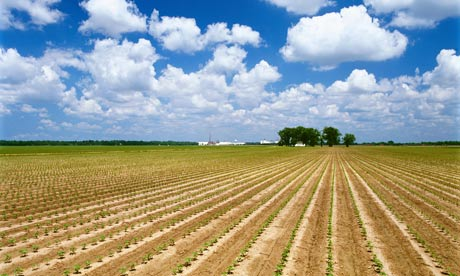 Photo of Miss. cotton field -The Guardian