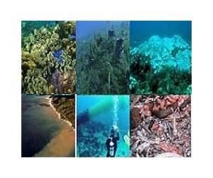 """coral-reef-caribbean-dregradation""Source: Space.com"
