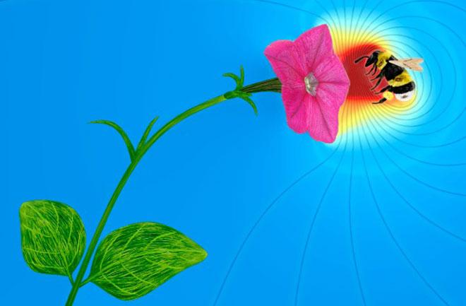 """Flower power""COPYRIGHT JULIAN HARRIS AND DOMINIC CLARKE"