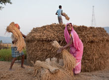 """People work on a rice field in Bihar."" Photograph: Chiara GoiaSource: The Guardian"