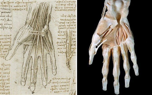 """The bones, muscles and tendons of the hand c.1510-11 and 3D image of a dissected hand."" Photo: Royal Collection Trust / © Her Majesty Queen Elizabeth II 2013 /© Mark Mobley, West Midlands Surgical Training Centre - Source: Telegraph"