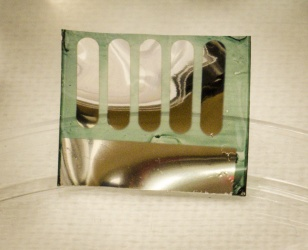 """Photograph of a solar cell fabricated at Georgia Tech on nanocellulose substrates derived from trees. Photo courtesy of Canek Fuentes-Hernandez.""  Source- GATech"