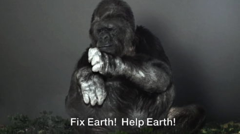 The Gorilla Foundation-Koko